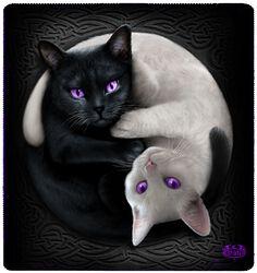 Yin Yang Cats fleecefilt